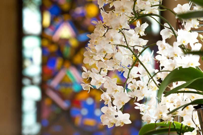Abbaye de Fontfroide - FESTIVAL ORCHIDÉES À FONTFROIDE